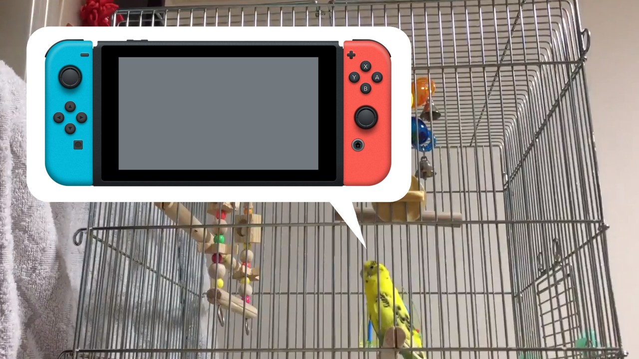 Random: Parrot Learns To Mimic Nintendo Switch Menu Sounds With Shocking Accuracy