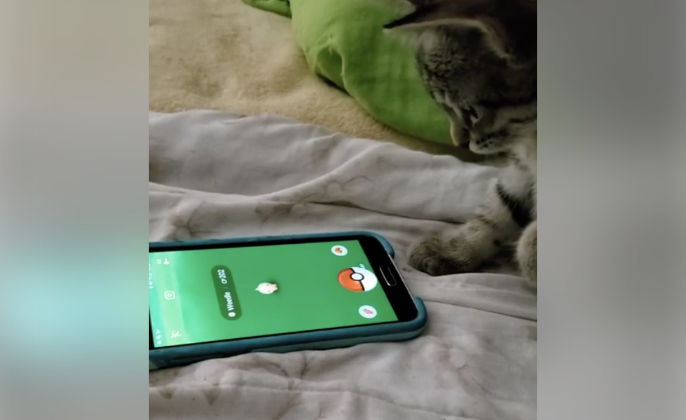 This Intelligent Cat Knows How To Play Pokemon GO